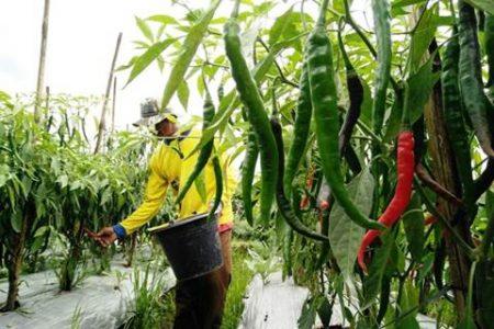 hasil eco farming